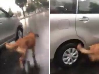 Άντρας έδεσε το σκύλο του και τον άφησε να τρέχει έξω από το αμάξι ώστε να τον εκπαιδεύσει