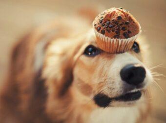 Οι 18 (αθώες) τροφές που δεν πρέπει να τρώει ο σκύλος σου