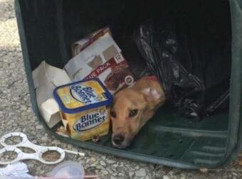 Έριξε το άρρωστο σκυλί της στα σκουπίδια δεμένο, αλλά ξέχασε ότι το κάρμα επιστρέφει πάντα