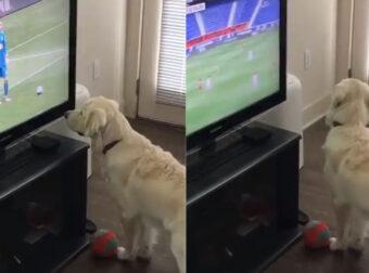 Σκύλος βλέπει Μουντιάλ και νομίζει ότι η μπάλα βγήκε έξω από την τηλεόραση