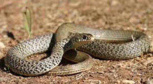Μόνο στην Ελλάδα! Τον τσίμπησε φίδι, πήγε στο νοσοκομείο αλλά δεν του δόθηκε ορός επειδή ήταν…