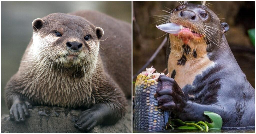 Tο πιο αρρωστημένο ζώο στον πλανήτη βιάζει τα θηλυκά, τα μωρά, νεκρά ζώα και άλλα είδη