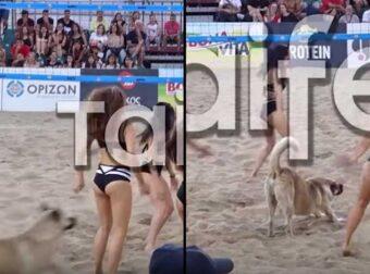 Θεσσαλονίκη: Σκύλος μπούκαρε στις τσιρλίντερ σε αγώνα βόλεϊ στην πλατεία Αριστοτέλους