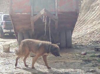 Καστροσυκιά Πρέβεζας: Σκύλος δεμένος με σκοινί σε καρότσα τρακτέρ-Αυτός που τον έχει απειλεί κιόλας