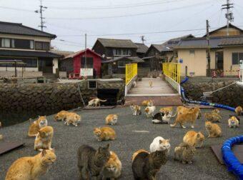 Ιαπωνία: Δείτε Υπέροχες εικόνες από το νησί της γάτας!