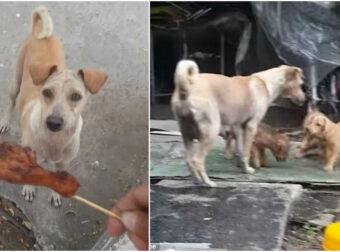 Έδωσε φαγητό σε μια αδέσποτη σκυλίτσα – Μέτα από λίγο αυτό που είδε τον έκανε να δακρύσει