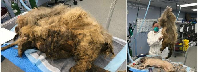 Πήγαν για κούρεμα έναν βρώμικο σκύλο – Η κτηνίατρος Στο τέλος έμειναν έκπληκτη με τη μεταμόρφωσή του