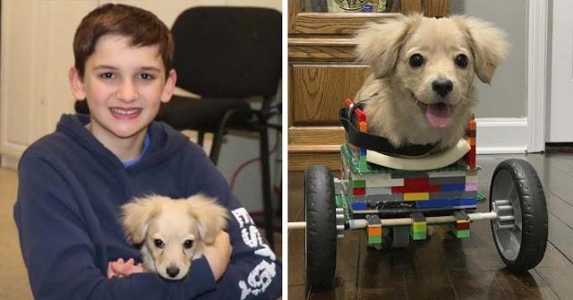 12χρονο αγόρι δημιούργησε αναπηρική καρέκλα με κομμάτια Lego για σκύλο με αναπηρία