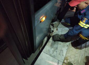 Γνωστό αδεσποτάκι της Νέας Σμύρνης εγκλωβίστηκε στο τραμ- Κατάφεραν και το έσωσαν