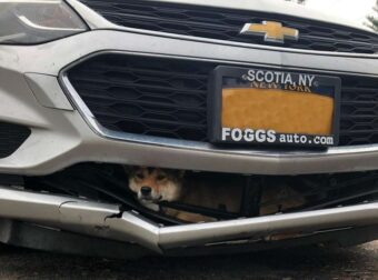 Σκυλίτσα χτυπήθηκε από αυτοκίνητο, σφήνωσε στον προφυλαχτήρα και ταξίδεψε ζωντανή 25 χιλιόμετρα