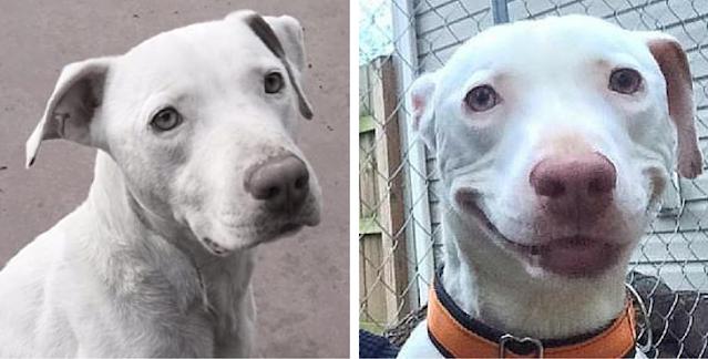 Το εγκαταλελειμμένο σκυλί δεν μπορεί να σταματήσει να χαμογελά από τη στιγμή που βρήκε ένα νέο σπίτι