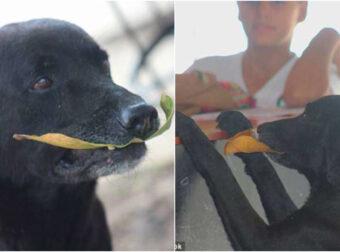 Φοβερός σκύλος «αγοράζει» κουλουράκια και πληρώνει με φύλλα δέντρου