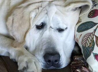 Παραμορφωμένος σκύλος που δεν τον ήθελε κανείς μεταμορφώθηκε μόλις υιοθετήθηκε