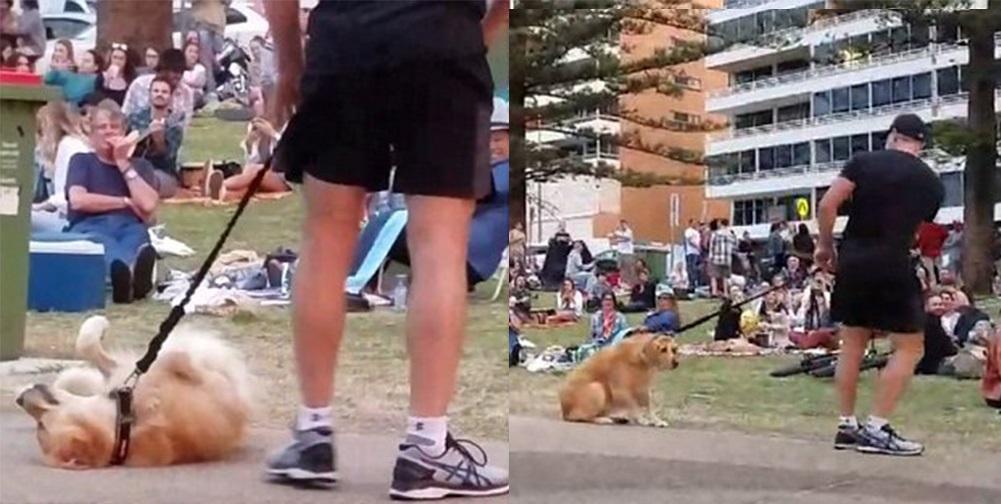 Σκύλος το παίζει νεκρός για να μη φύγει από το πάρκο