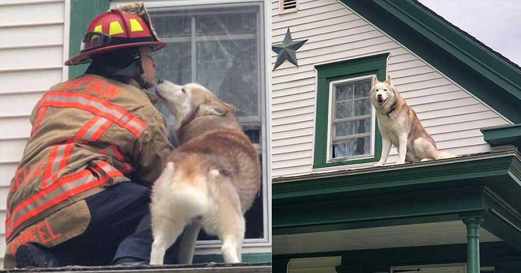 Σκύλος φιλάει τον πυροσβέστη που τον έσωσε από οροφή που είχε παγιδευτεί