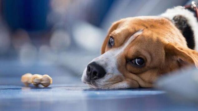 «Η ανθρωπιά ενός σκύλου»: Το ποστ της δημοσιογράφου στο φέισμπουκ που έγινε viral