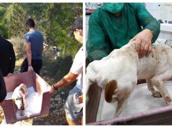 Εθελοντές έσωσαν σκυλίτσα που βρέθηκε κοκαλιασμένη και χωρίς να μπορεί να περπατήσει στο δάσος Δαφνίου