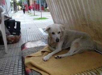 Πέθανε η γέρικη σκυλίτσα που ζούσε χρόνια στην Ιερά Οδό στο Αιγάλεω- Μόνη σε ένα κλουβί του ΔΙΚΕΠΑΖ
