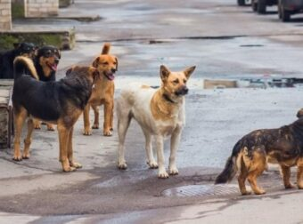 Βγήκε η απόφαση του €1,4 εκατ. για τα αδέσποτα ζώα – Η ευθύνη των δήμων