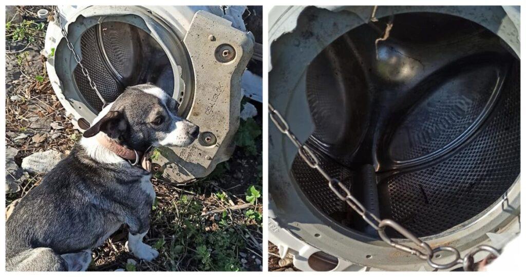 Σάμος: Βρήκαν σκυλάκι μόνιμα δεμένο με αλυσίδα σε κάδο πλυντηρίου- Το μετέφεραν οι εθελοντές στο καταφύγιο