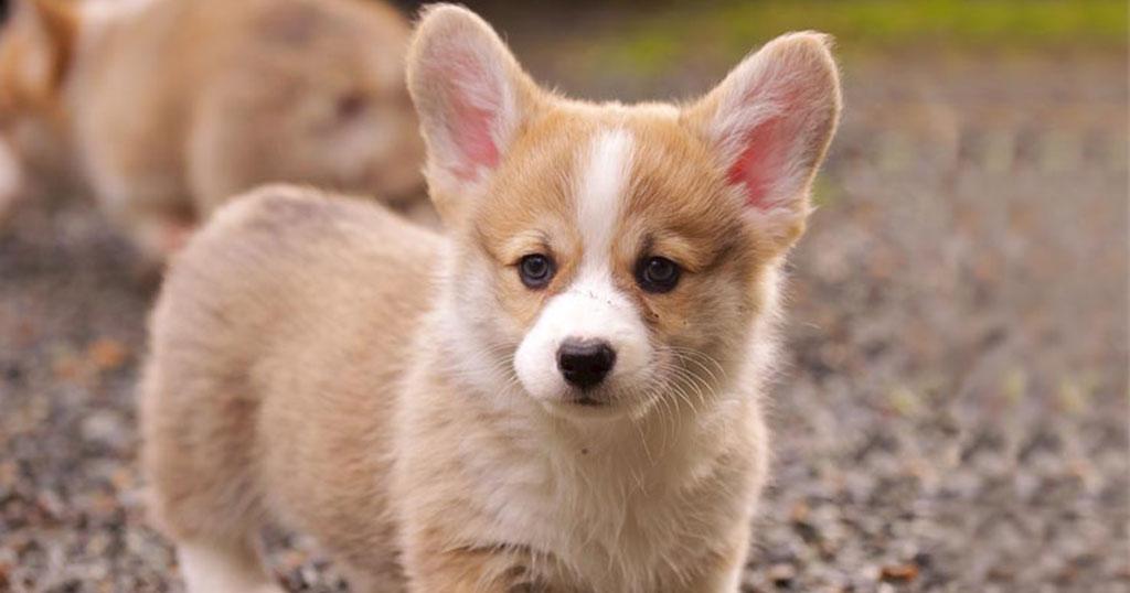 Τα σκυλιά μπορούν να «πουν» αν κάποιος είναι κακός άνθρωπος