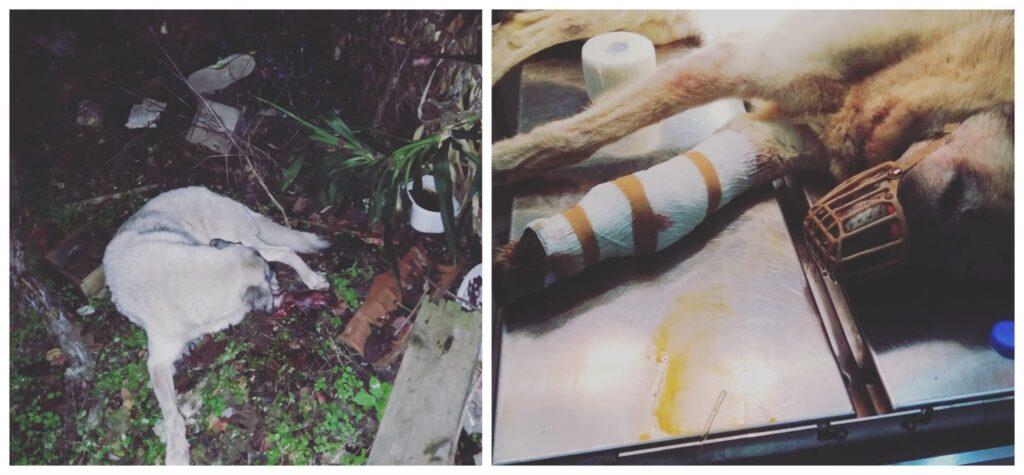 H oμάδα αστικής πανίδας του δήμου Αθηναίων έσωσε σκύλο που είχε πέσει σε χαράδρα στα Τουρκοβούνια