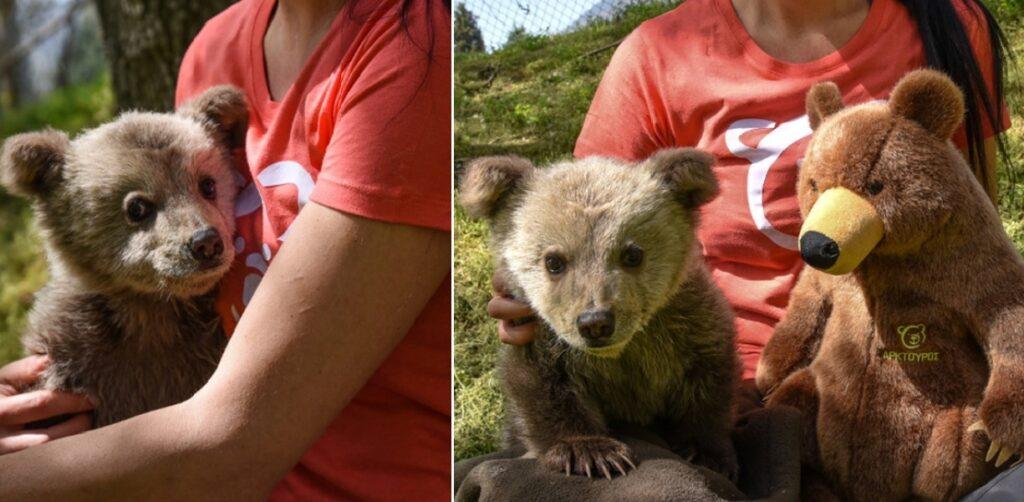 O Λουίτζι είναι το νέο αρκουδάκι του Αρκτούρου και είναι γλύκας