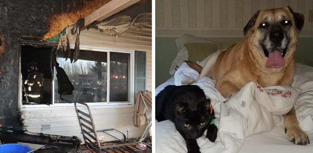 Νόμιζε πως η Γάτα της είχε καεί στην Πυρκαγιά. 2 Μήνες αργότερα όμως, ο Σκύλος της την βρίσκει μέσα στο καμένο σπίτι!