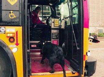 Σκυλίτσα παίρνει μόνη της το λεωφορείο, πηγαίνει σε πάρκο να παίξει και μετά γυρίζει ξανά πίσω στο σπίτι της