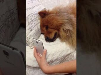 Σκύλος είναι μακριά από τον ιδιοκτήτη του και «επικοινωνεί» μαζί του με βιντεοκλήση