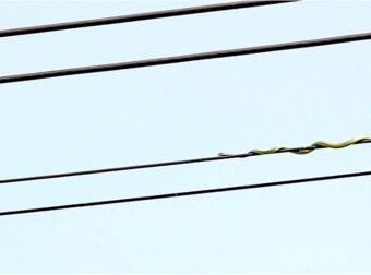 Φίδι αψηφά την βαρύτητα και ανεβαίνει πάνω σε καλώδιο για να κυνηγήσει πουλί