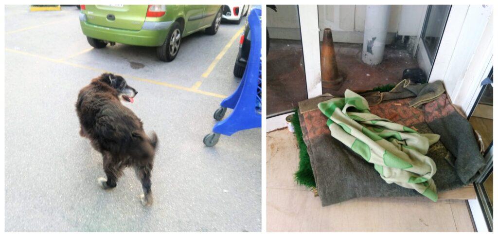 Το κατάστημα Σκλαβενίτης στην Πέτρου Ράλλη έβαλε κρεβατάκι έξω από το μαγαζί για ένα γέρικο σκυλάκι