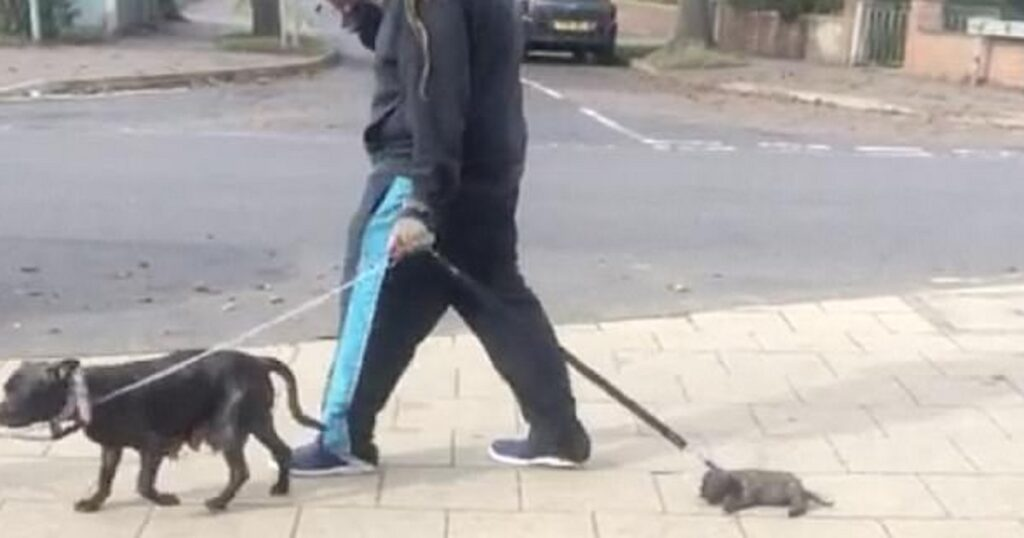 Ιδιοκτήτης σκύλου σέρνει το 5 εβδομάδων κουτάβι του που είναι πολύ κουρασμένο για να περπατήσει
