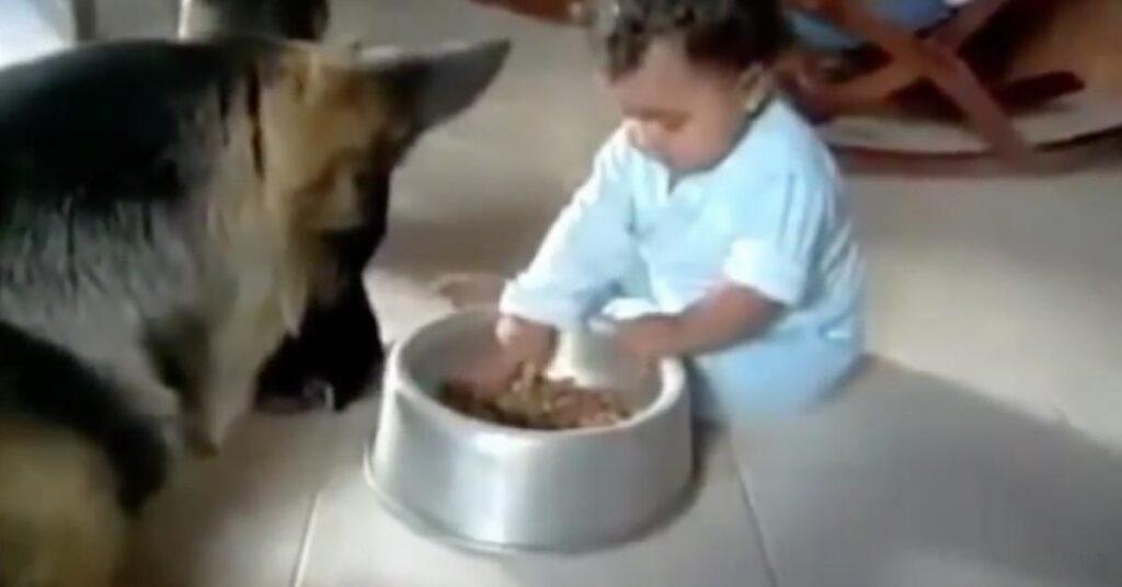 """Σκύλος βλέπει το μωρό να του """"κλέβει"""" το φαγητό. Η αντίδραση του; Ανεκτίμητη!"""