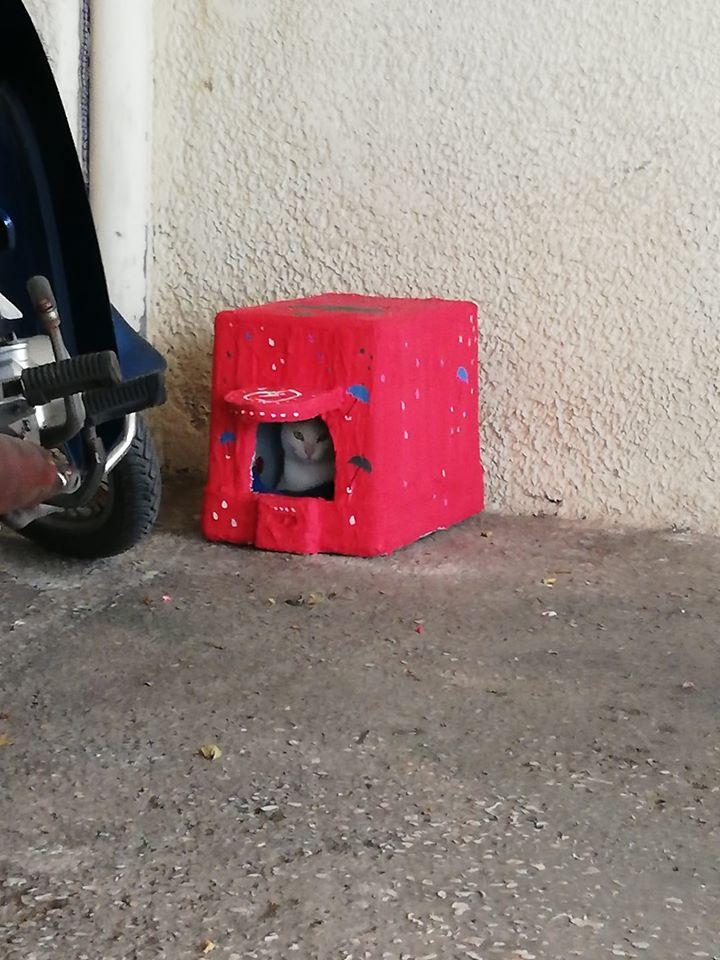 Μια γατούλα τεμπελιάζει σε ένα σπιτάκι, σε μια πυλωτή, κάπου στη Νέα Σμύρνη