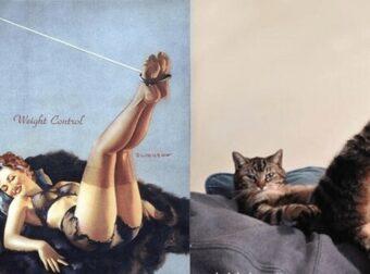 10 Γάτες ποζάρουν σαν Μοντέλα της Δεκαετίας του 1940 και Ρίχνουν το ίντερνετ. Δείτε το Καταπληκτικό Αποτέλεσμα!
