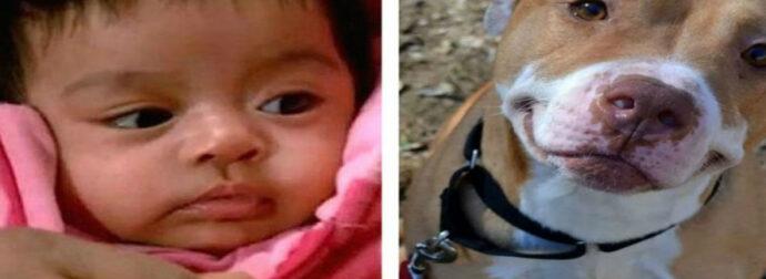 Σκύλος-ήρωας έσωσε το μωρό και τη μάνα από τους οπλισμένους κλέφτες!