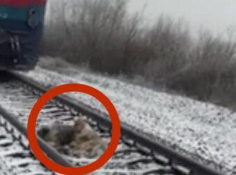 Το Τρένο Πλησιάζει με Φόρα αλλά οι Σκύλοι δεν Κουνιούνται ούτε Βήμα. Ο Λόγος; Θα σας Συγκλονίσει!