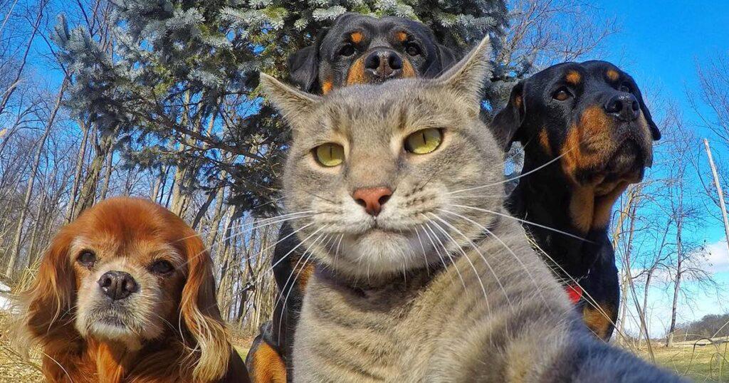 Ποιος είπε ότι τα Ζώα δεν Μπορούν να Βγάλουν Selfie; Δείτε 20 Επικές Φωτογραφίες τους και σίγουρα θα Χαμογελάσετε!