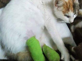 Κύπρος, Νεκροταφείο Μενεού: Αναζητούν αυτόν που έκοψε τα δυο πόδια και έβγαλε το μάτι σε μια έγκυο γατούλα