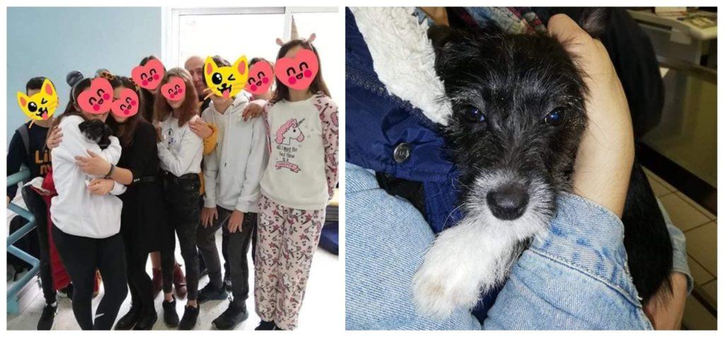 Καβάλα: Μαθητές σχολείου φρόντισαν σκυλάκι που βρήκαν παρατημένο σε κλουβί- Το ζώο υιοθετήθηκε