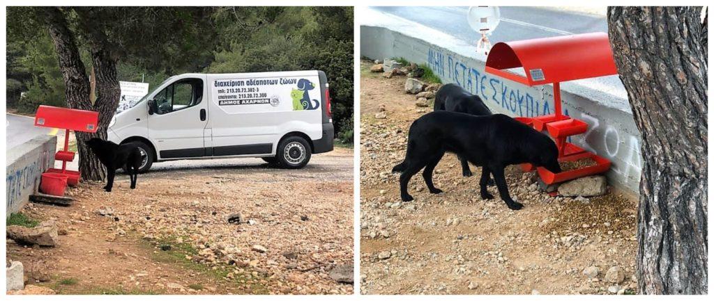 Ο δήμος Αχαρνών πήγε να ταΐσει τα αδέσποτα
