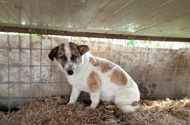 Η σκυλίτσα αυτή ζει θλιμμένη μέσα σε ένα κλουβί- Υπάρχει ένα σπίτι που θα την αγαπήσει;