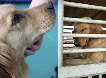 Η Κακοποίηση Ζώων Συνδέεται με την Κακοποίηση Ανθρώπων. Οι Δράστες Υπήρξαν Θύματα βίας και μπορούν να Γίνουν Δολοφόνοι