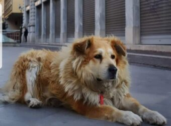 Βοηθήστε να βρούμε αυτόν που με το φορτηγό του πάτησε επίτηδες το Σωκράτη, το γνωστό σκυλάκο του κέντρου της Αθήνας