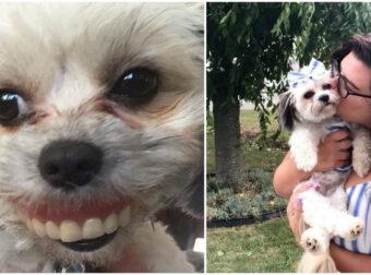 Άνδρας ξύπνησε και είδε τον σκύλο Να Φοράει Την Μασέλα Του – Ένα πονηρό χαμόγελο στο πρόσωπό της
