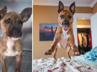 Φωτογραφίες σκύλων πριν και μετά την υιοθεσία τους που θα σας συγκινήσουν