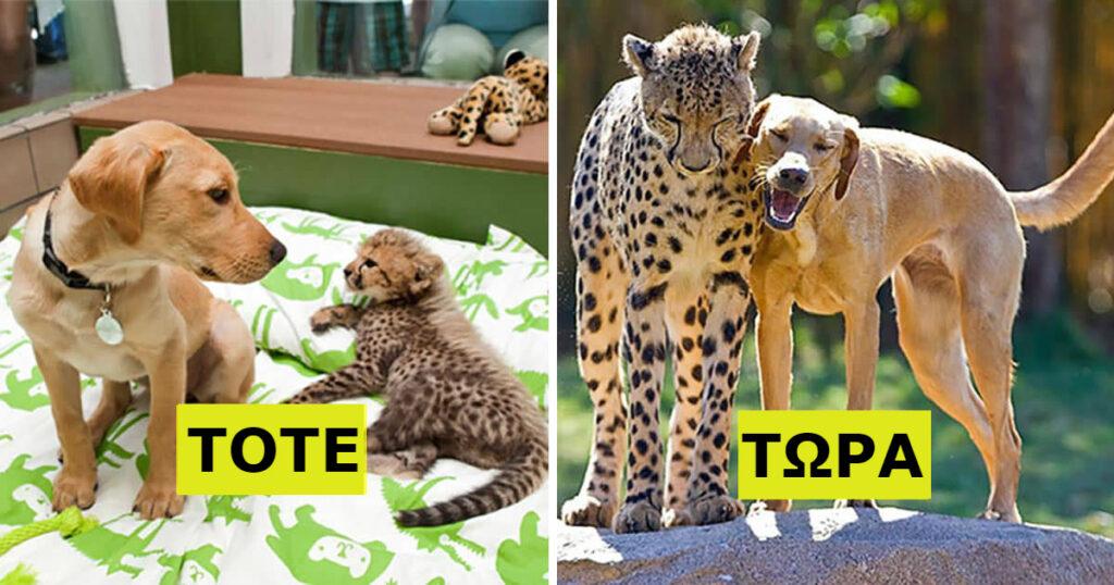 22 Υπέροχες Φωτογραφίες Ζώων Που Μεγάλωσαν Μαζί Και Έγιναν Αχώριστοι Φίλοι.