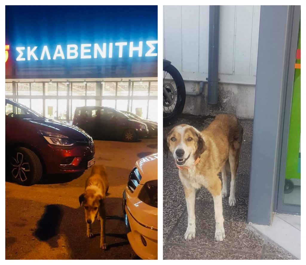 Οι υπάλληλοι του Σκλαβενίτη Δράμας φροντίζουν μια αδέσποτη γέρικη σκυλίτσα