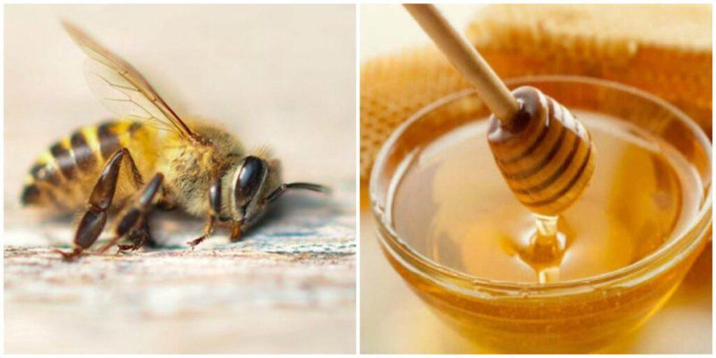 Οι Μέλισσες είναι Επίσημα το Σημαντικότερο Είδος του Πλανήτη – κι όμως απειλείται